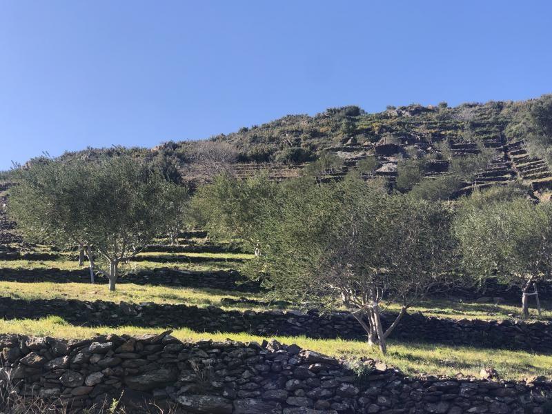 Venta  terreno Banyuls sur mer 16500€ - Fotografía 4