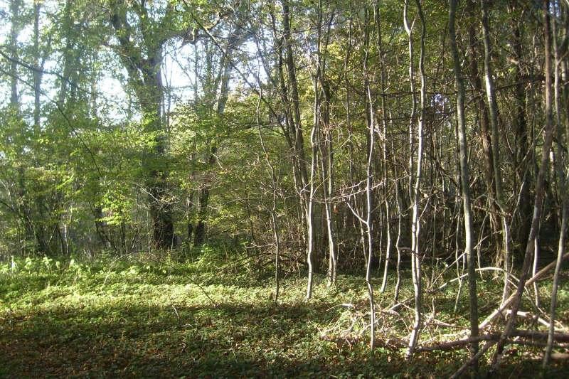 Vente terrain Ivoy le pre 30000€ - Photo 2
