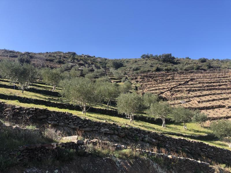 Venta  terreno Banyuls sur mer 16500€ - Fotografía 2
