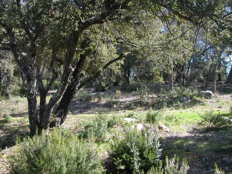 Vente terrain Le cannet des maures 135 000€ - Photo 3