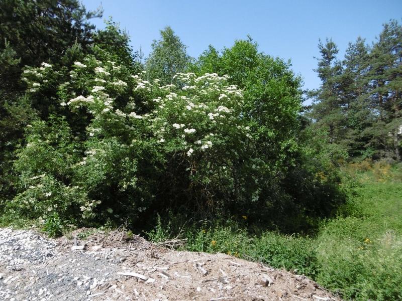 Vente terrain Le chambon sur lignon 20000€ - Photo 5