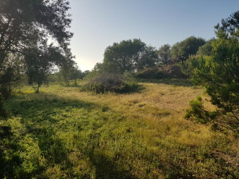 Vente terrain Corbara 720000€ - Photo 8