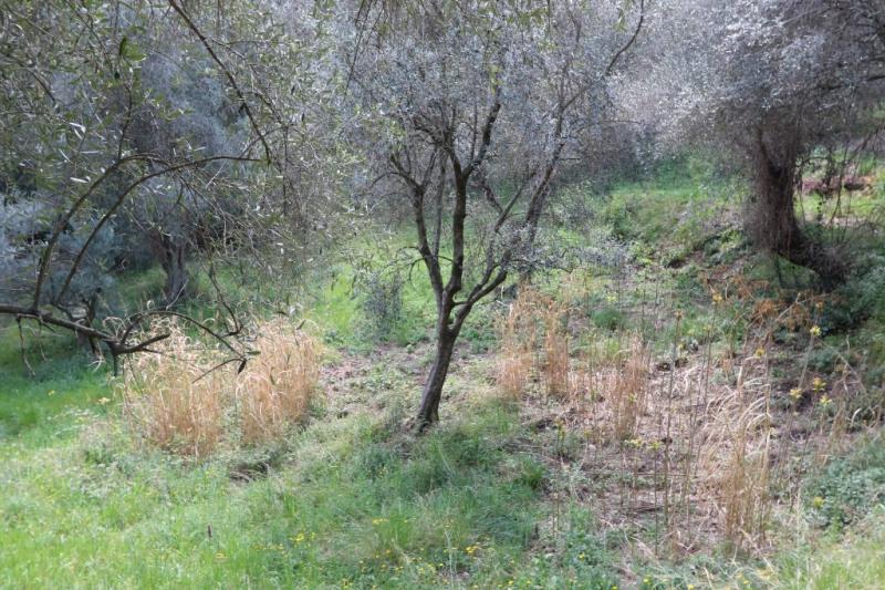 Vente terrain Nice 337000€ - Photo 6