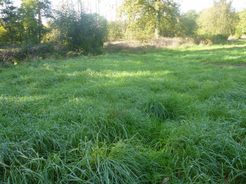 Vente terrain Belz 90000€ - Photo 1