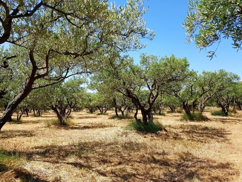 Vente terrain Barbentane 29 500€ - Photo 3