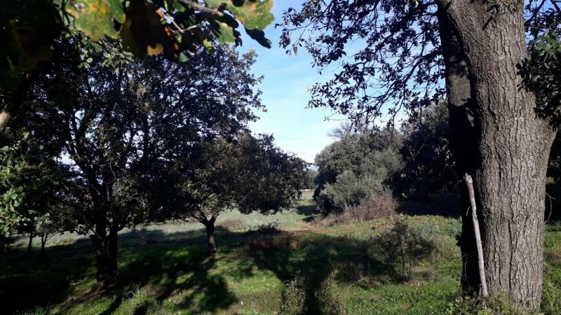 Vente terrain Calenzana 173250€ - Photo 3