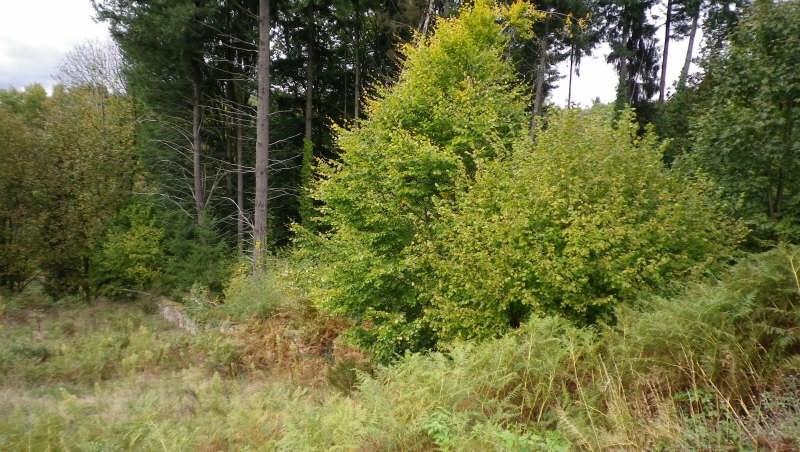Vente terrain Rilhac lastours 15000€ - Photo 2