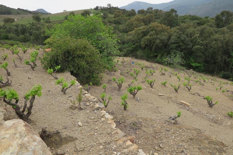Venta  terreno Collioure 70000€ - Fotografía 2