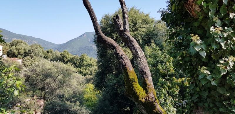 Vente maison / villa Eccica-suarella 390000€ - Photo 31