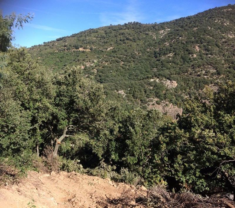 Vente terrain Sorede 135000€ - Photo 1