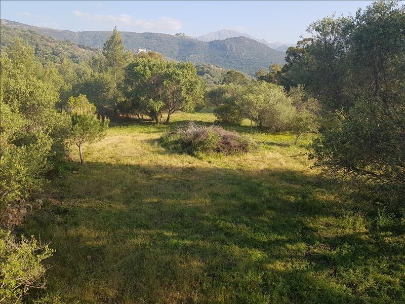 Vente terrain Corbara 720000€ - Photo 4