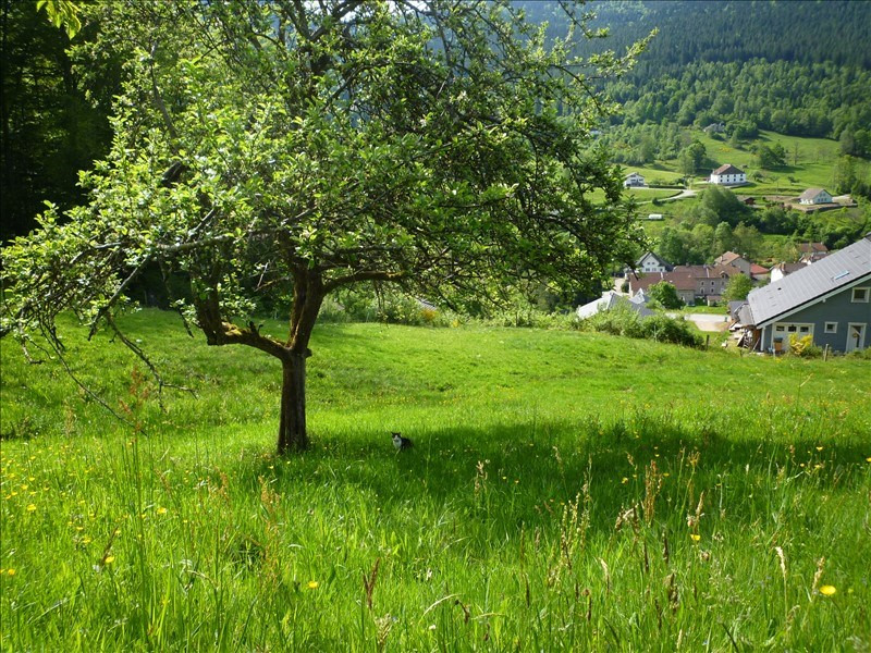Vente terrain Cornimont 97200€ - Photo 2