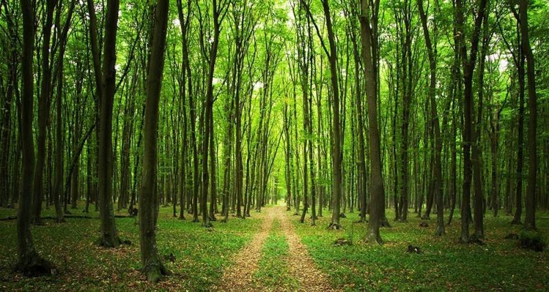 Vente terrain Dieudonne 12500€ - Photo 1