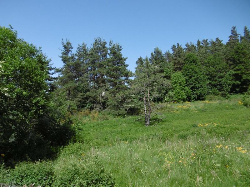 Vente terrain Le chambon sur lignon 20000€ - Photo 2