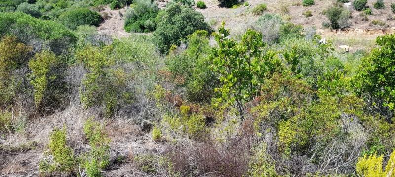 Vente terrain Pietrosella 155000€ - Photo 6
