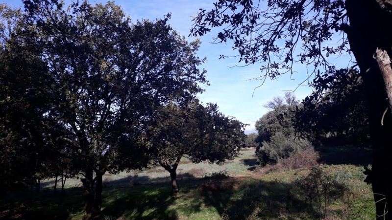 Vente terrain Calenzana 173250€ - Photo 4