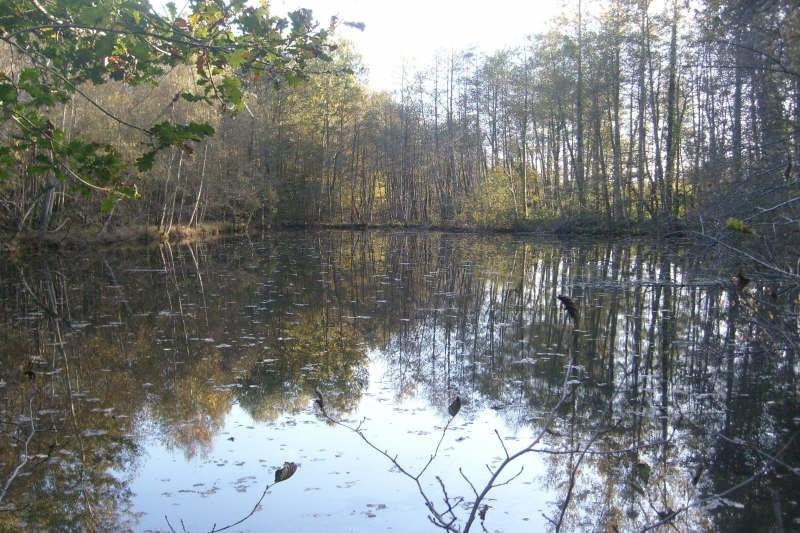 Vente terrain Ivoy le pre 30000€ - Photo 3