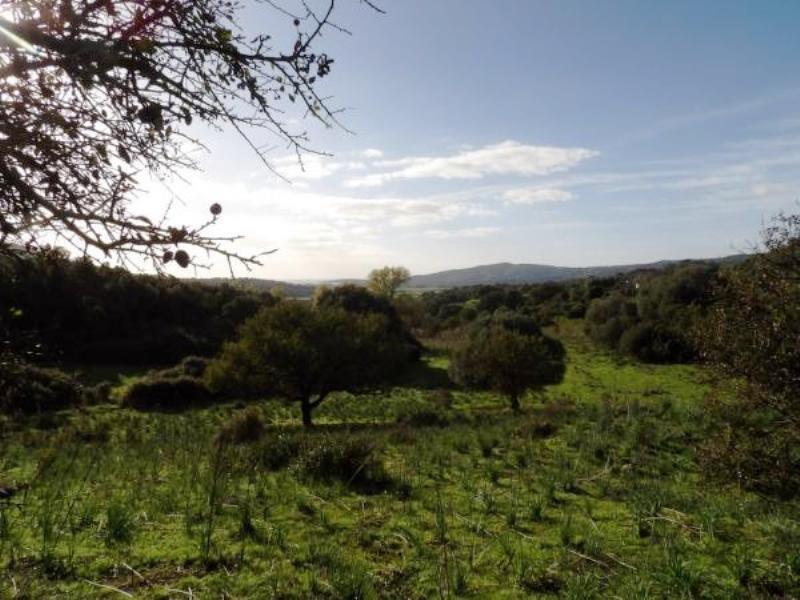 Vente terrain Sollacaro 575000€ - Photo 7