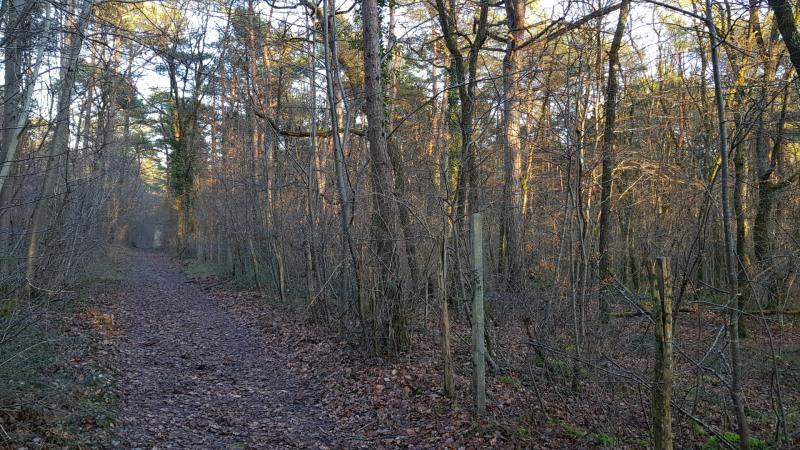Vente terrain Montigny-sur-loing 130000€ - Photo 2