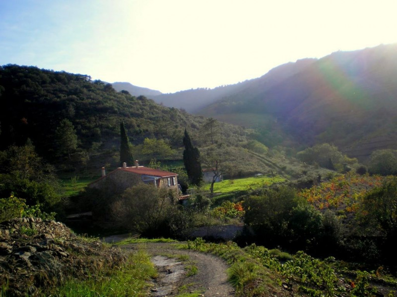 Vente maison / villa Banyuls sur mer 497000€ - Photo 4