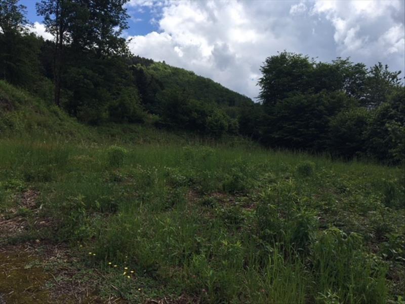 Vente terrain Saulxures sur moselotte 38900€ - Photo 5