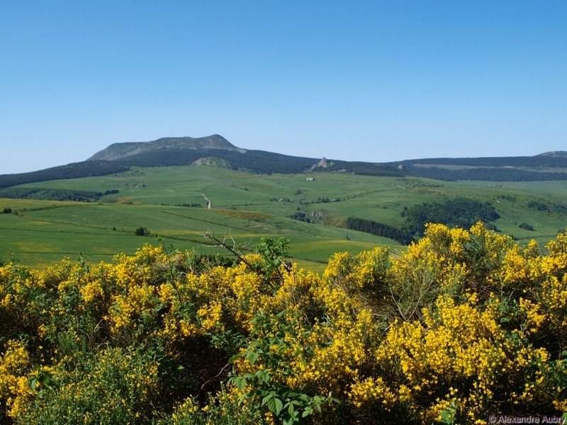 Vente terrain Fay sur lignon 15000€ - Photo 4