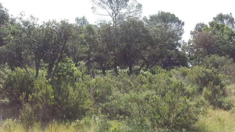 Sale site Le cannet des maures 122 000€ - Picture 3