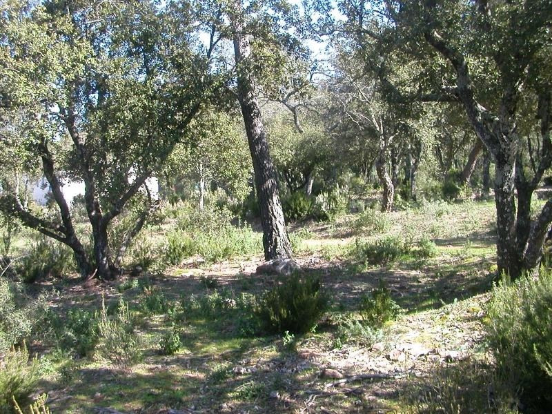 Sale site Le cannet des maures 122 000€ - Picture 2