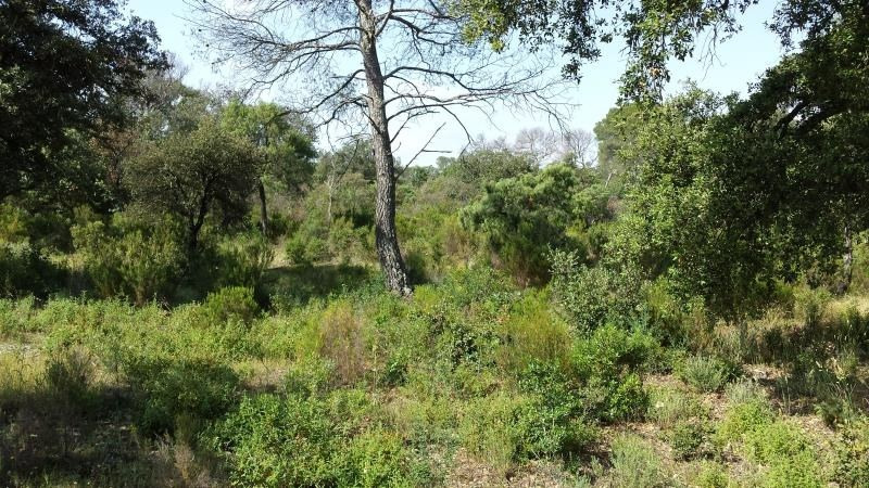 Sale site Le cannet des maures 122 000€ - Picture 1