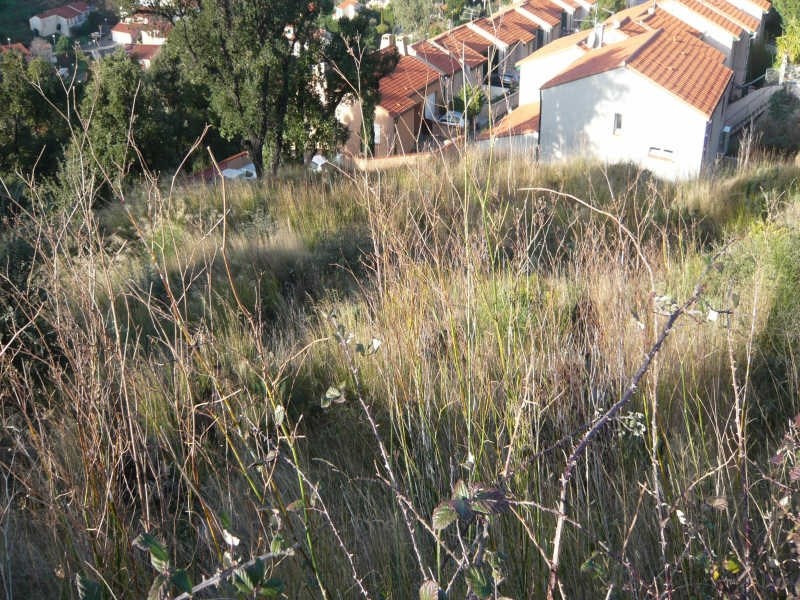 Vente terrain Collioure 199 000€ - Photo 6