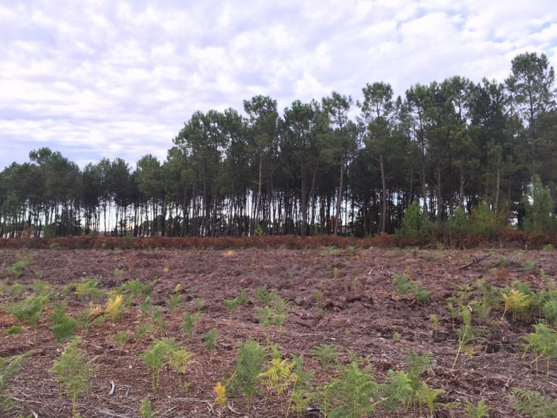 Vente terrain Dax 83000€ - Photo 1