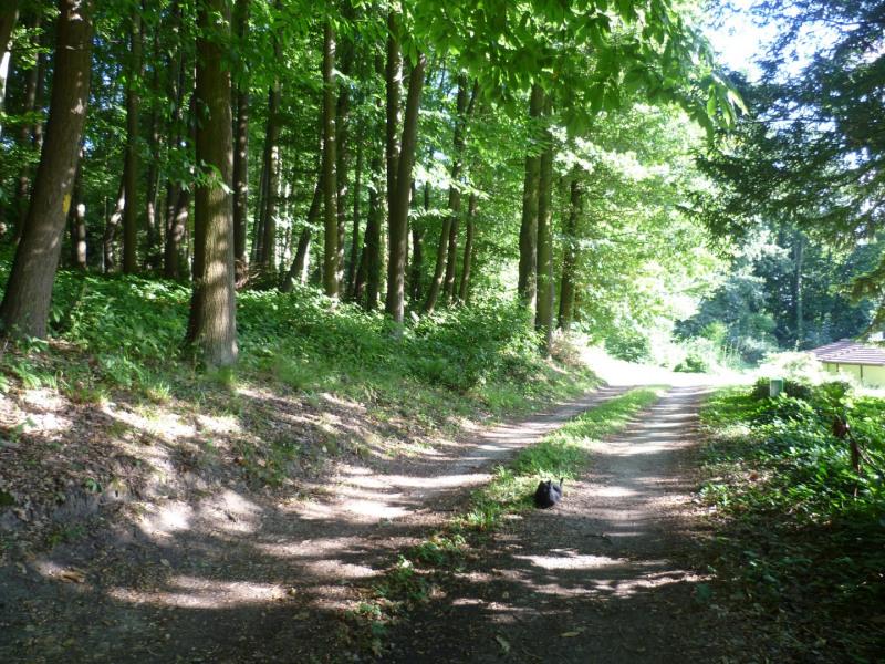 Vente terrain Montlignon 2000000€ - Photo 3