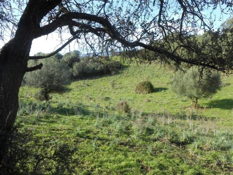 Vente terrain Sollacaro 575000€ - Photo 6
