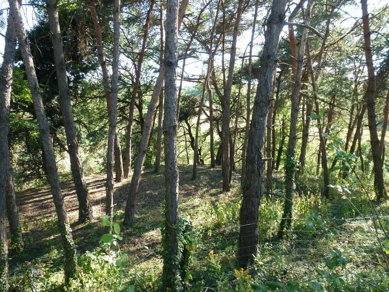 Vente terrain Hauterives 77400€ - Photo 3
