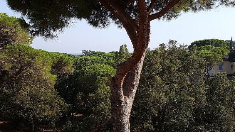 Vacation rental apartment Les issambres 600€ - Picture 13