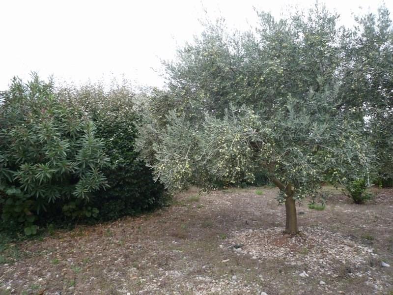 Sale site Serignan du comtat 96000€ - Picture 1
