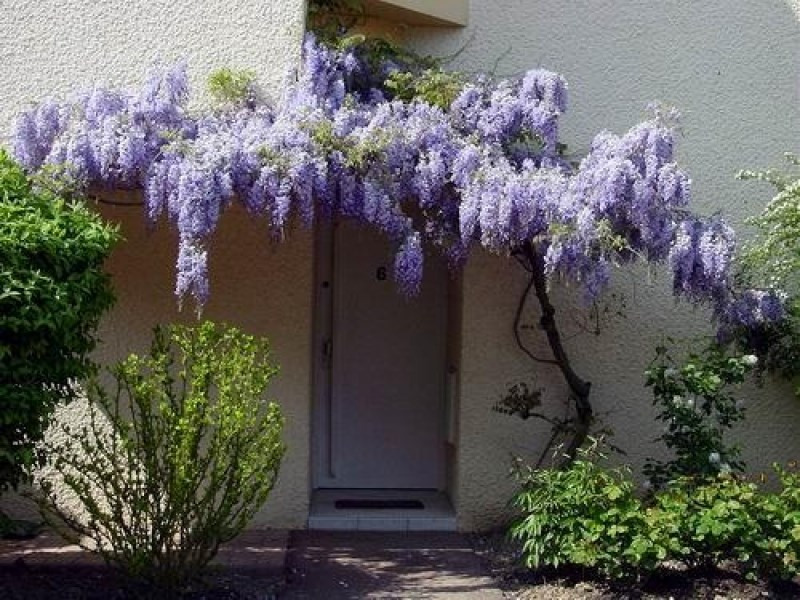 Verkoop  huis Montigny le bretonneux 420000€ - Foto 1