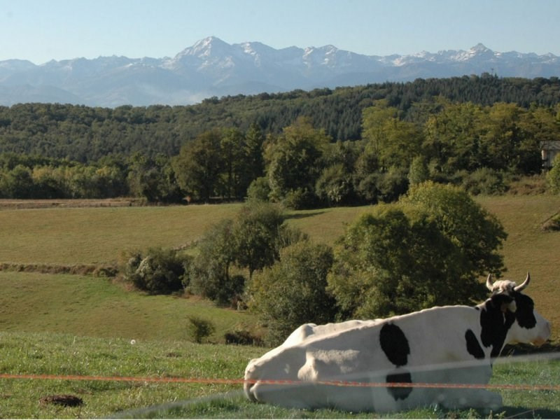 Vente terrain Pouyastruc 26200€ - Photo 1