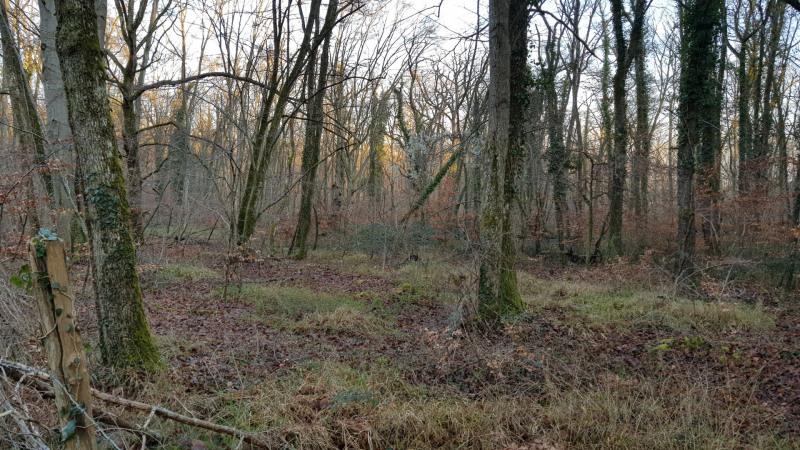 Vente terrain Montigny-sur-loing 130000€ - Photo 4