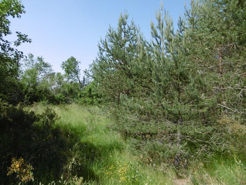 Vente terrain Le chambon sur lignon 20000€ - Photo 3