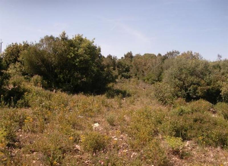 Vente terrain Bonifacio 570000€ - Photo 3
