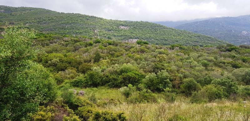 Vente terrain Pietrosella 155000€ - Photo 13