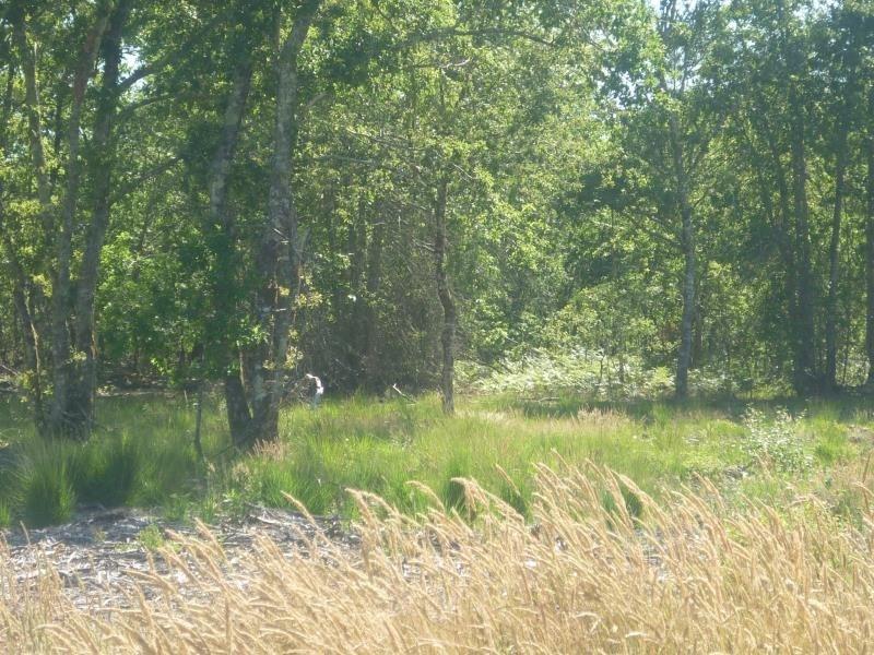 Vente terrain Saugnac et muret 85000€ - Photo 2