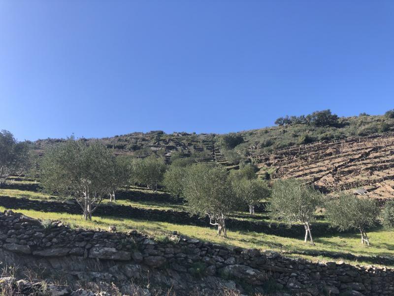 Venta  terreno Banyuls sur mer 16500€ - Fotografía 5