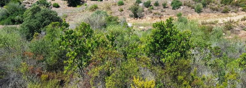 Vente terrain Pietrosella 155000€ - Photo 9