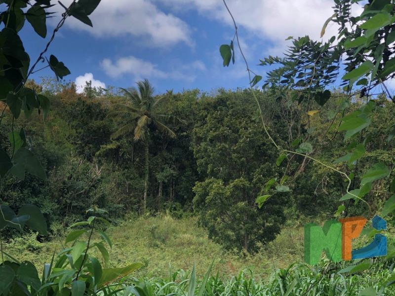 Vente terrain Riviere salee 137500€ - Photo 1