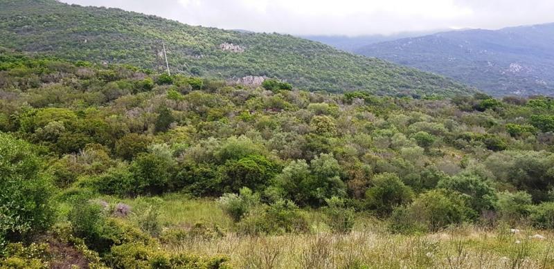 Vente terrain Pietrosella 155000€ - Photo 14