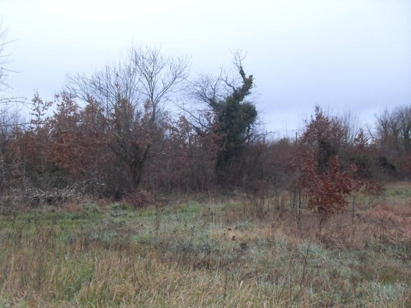 Vente terrain St medard de mussidan 33500€ - Photo 1
