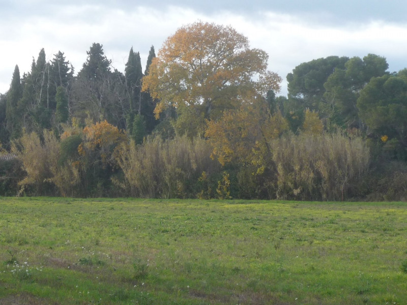 Vente terrain Piolenc 151000€ - Photo 1