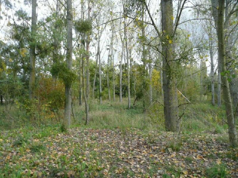 Vente terrain Aubigny sur nere 4500€ - Photo 2
